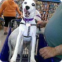 Adopt A Pet :: Clover - Albemarle, NC