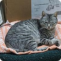 Adopt A Pet :: Pearl - Raritan, NJ