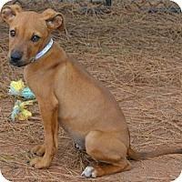 Adopt A Pet :: Lucy - Athens, GA