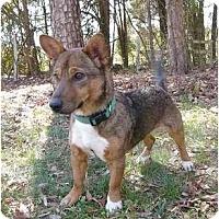 Adopt A Pet :: Kelly - Mocksville, NC