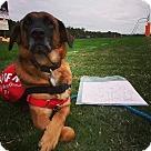 Adopt A Pet :: Clarissa 3995