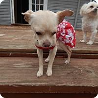 Adopt A Pet :: Kimberly - West Deptford, NJ