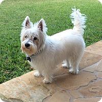 Adopt A Pet :: Finley - Frisco, TX