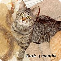 Adopt A Pet :: Ruth - Bentonville, AR