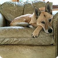 Adopt A Pet :: Edie URGENT - Sacramento, CA
