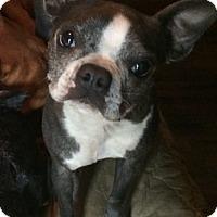 Adopt A Pet :: NuNu - Van Nuys, CA