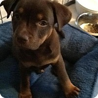 Adopt A Pet :: Regi Girl - Phoenix, AZ