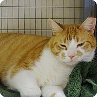 Adopt A Pet :: Nick - St. Johnsbury, VT