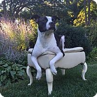 Adopt A Pet :: Lacey - Lebanon, CT
