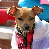 Adopt A Pet :: Tennison - Alpharetta, GA