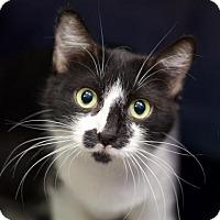 Adopt A Pet :: Crystal - Austin, TX