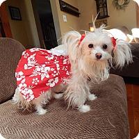 Adopt A Pet :: Sabrina - West Deptford, NJ