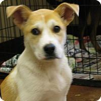Adopt A Pet :: Donald T. Woof - Groton, MA