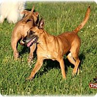 Adopt A Pet :: Oli - Kemah, TX