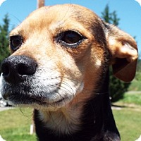 Adopt A Pet :: Dixie - Grants Pass, OR