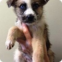 Adopt A Pet :: I'M ADPTD Sweeties