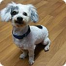 Adopt A Pet :: SPOT**9 YRS & 13 LBS!!!