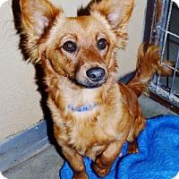 Adopt A Pet :: Max - San Jacinto, CA