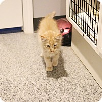 Adopt A Pet :: Peach Fuzz - Lincoln, NE