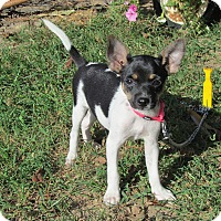 Adopt A Pet :: TILLY - Hartford, CT