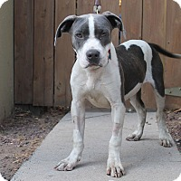 Adopt A Pet :: Thor - Los Angeles, CA