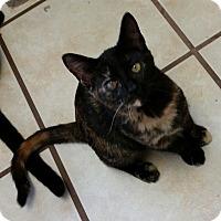 Adopt A Pet :: Kamala - Chippewa Falls, WI