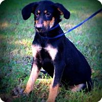 Adopt A Pet :: Mighty Moe~ meet me! - Glastonbury, CT