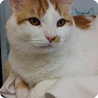 Adopt A Pet :: Calvin - Cloquet, MN
