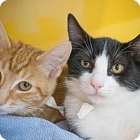 Adopt A Pet :: Smirnoff - Los Angeles, CA