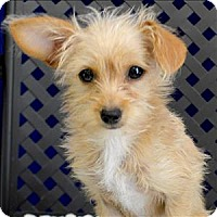 Adopt A Pet :: Minnie - Fort Davis, TX