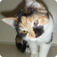 Adopt A Pet :: Sparkle - Hamburg, NY