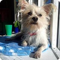 Adopt A Pet :: Pita - Tijeras, NM