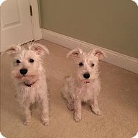 Adopt A Pet :: Anna & Elsa - Millersville, MD