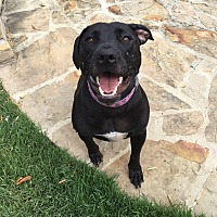 Adopt A Pet :: Lola - Westerville, OH