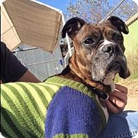 Adopt A Pet :: Frannie Jane - Austin, TX
