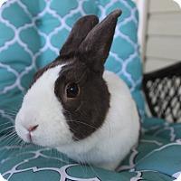 Adopt A Pet :: Bonnie - Hillside, NJ