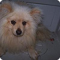 Adopt A Pet :: Lucky - Chewelah, WA
