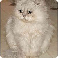 Adopt A Pet :: Sir Blue Majesty - Davis, CA