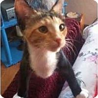 Adopt A Pet :: Ginger - Davis, CA