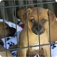 Adopt A Pet :: PuPpy - san diego, CA
