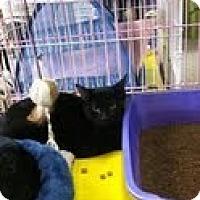 Adopt A Pet :: Zelda - Bedford, MA