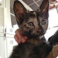 Adopt A Pet :: Buttercup - Madison, AL