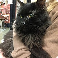 Adopt A Pet :: Rosco - Pittstown, NJ