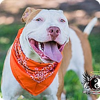 Adopt A Pet :: Nala - Naples, FL
