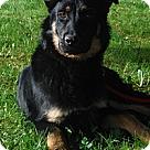 Adopt A Pet :: Greg PENDING