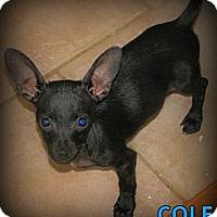 Adopt A Pet :: Cole - Silsbee, TX