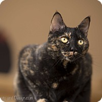 Adopt A Pet :: Chestnut - Fountain Hills, AZ