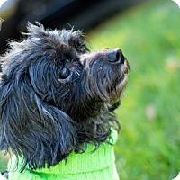 Adopt A Pet :: Sir Charles - Cary, NC