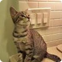 Adopt A Pet :: Arthur - Berkeley Hts, NJ