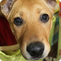 Adopt A Pet :: Musca-Adopted! - Detroit, MI
